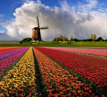 Особенности оффшоров в Голландии