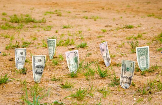 Вложения в землю могут принести достойные доход