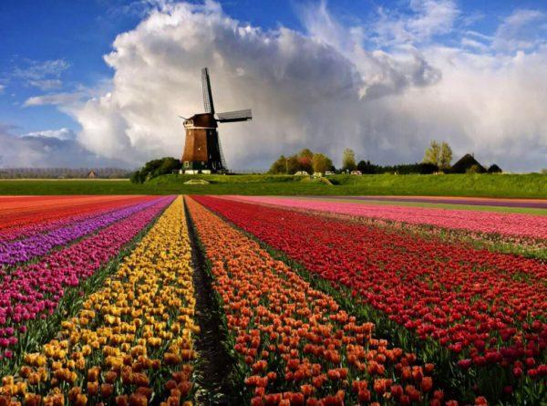 Голландский оффшор