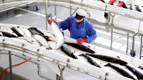 Рыболовный промысел в Норвегии
